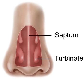 danielgancmd-nose-anatomy